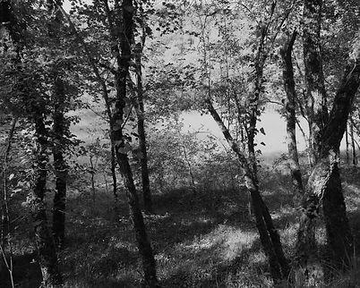 The Bouriane paths - 28