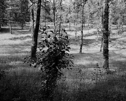 The Bouriane paths - 6