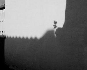 La feuille et son ombre