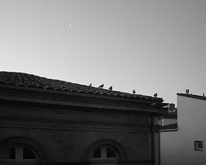 Les pigeons sur le toit
