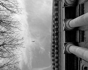 L'oiseau confronté