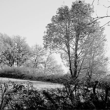 Quercy landscapes #21