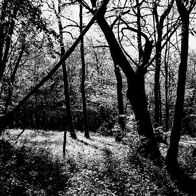 The chestnut forest #7
