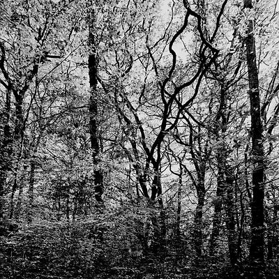 The chestnut forest #9