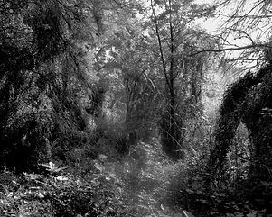 The path in the forest #15
