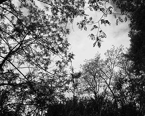 Branches dans le ciel