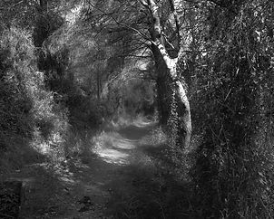 The path in the forest #12
