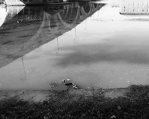 La réveuse de la Garonne
