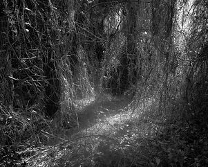 The path in the forest #6