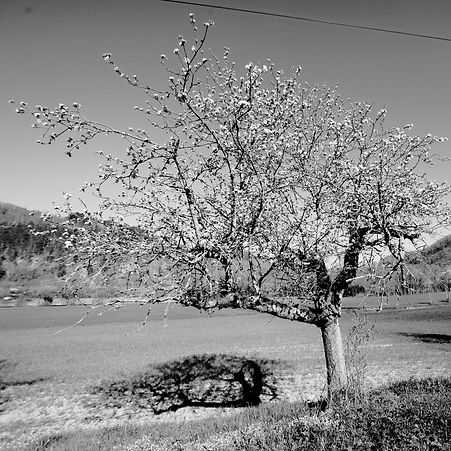 Quercy Selections - 29