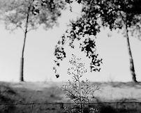 L'arbre embrassé