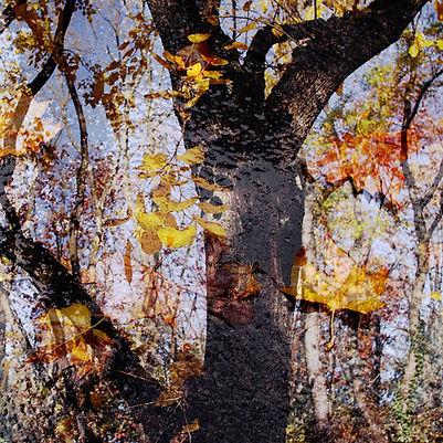 Couleurs d'automne - 7