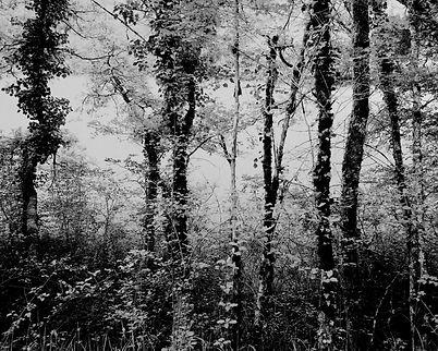 The Bouriane paths - 3