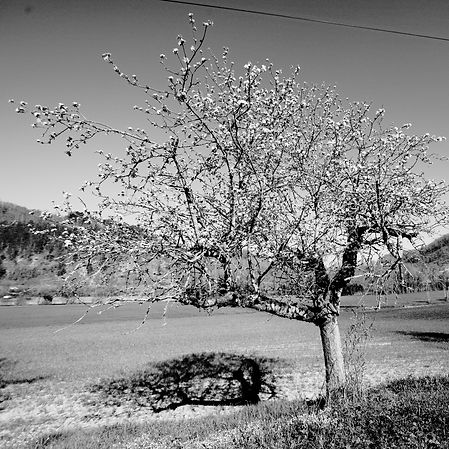 Spring in Quercy - 14