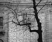 tree over bank