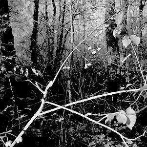 Forêt de premier plant