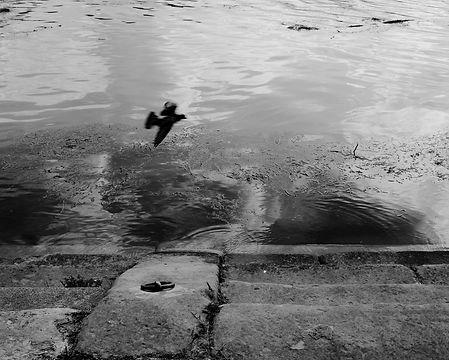 L'oiseau de la Garonne
