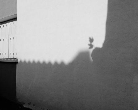 L'ombre de l'arbre
