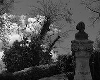 tree bird and statue