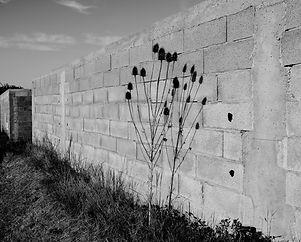 Le mur de chardons