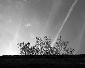 L'arbre et le mur