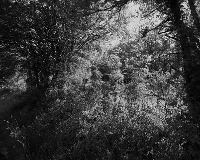 The Bouriane paths - 19