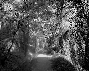 The path in the forest #16