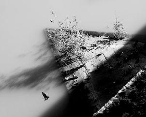 Pile oiseau
