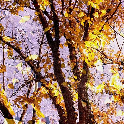 Couleurs d'automne - 9