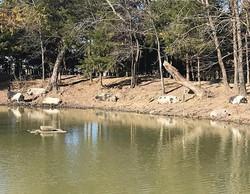 Pigs Pond Side