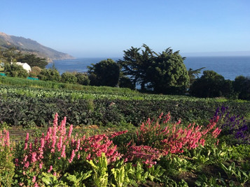 Esalen Day 1 : Case of the Freak Outs