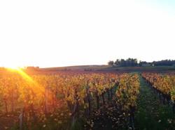 stroll through the vineyards
