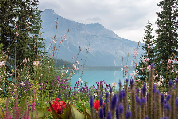 Emerald Lake Wildflowers