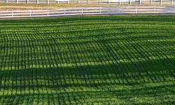 Verville Field in Spring