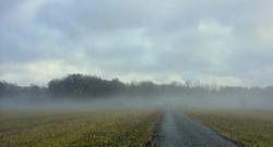 Morning Field