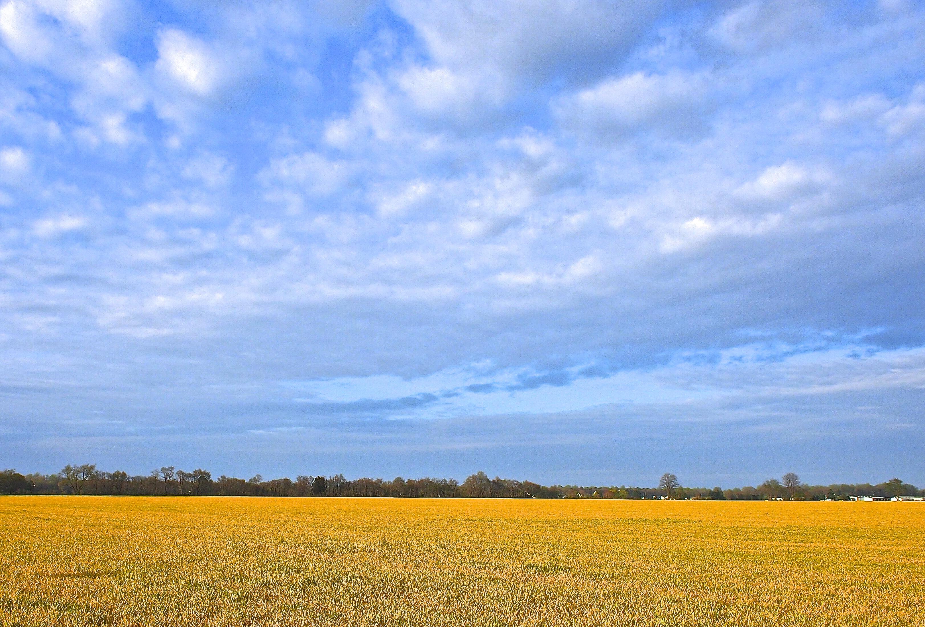 April Field