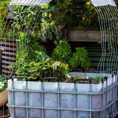 alternative garden.jpg