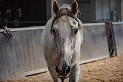 Cassidy   WoodLands   DSA Equine   2021   Web-58.jpg