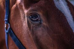 Art Shots   WoodLands   DSA Equine   2021   Web-9.jpg
