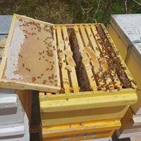beehive beekeeping mackay