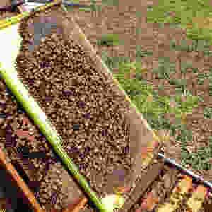 mackay beekeeping beehive healthy brood