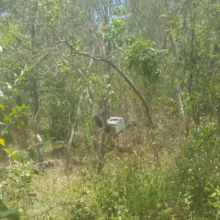 swarm bait box, swarm trap, Mackay beekeeping