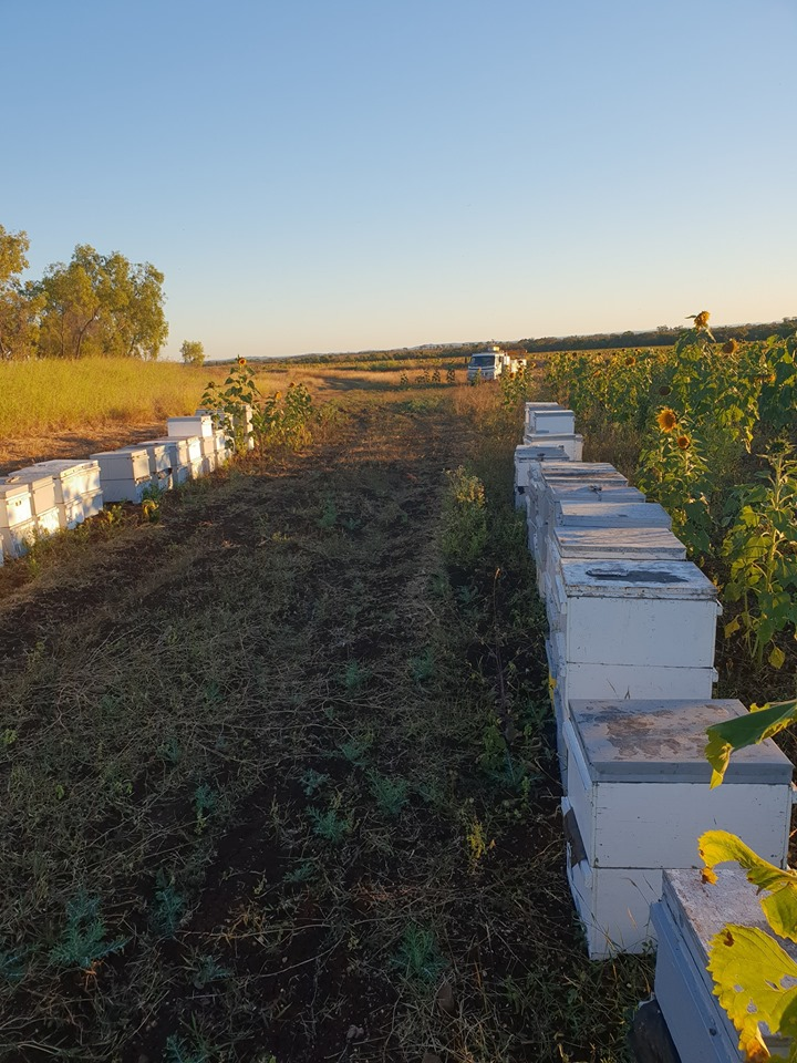 Beekeping in Mackay, Queensland.