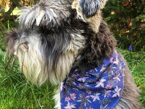 Dog Bandana and Bow Tie Tutorial