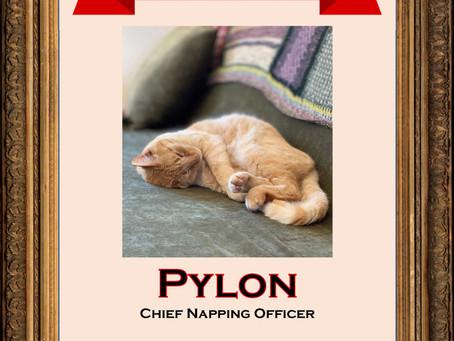 April 2020 Employee of the Month: Pylon