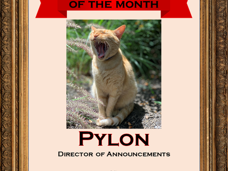 October 2020 Employee of the Month: Pylon