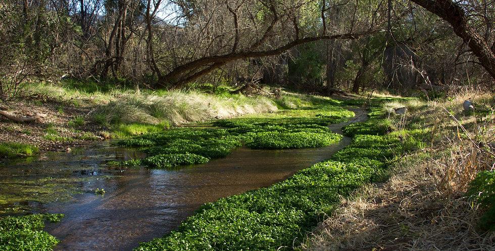 Sonoita Creek Grass Seed Mix