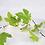 Thumbnail: Guirlandes feuillage fil cuivre - vert - 20 LED - à pile