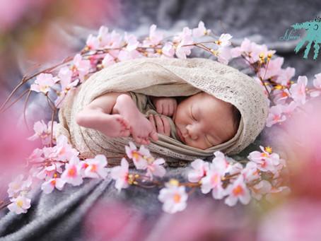 新生児でお花見?ニューボーン出張撮影OK!