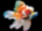 Goldwater goldfish Neath